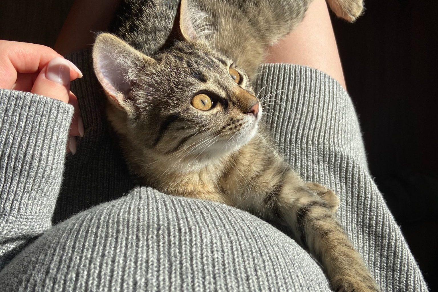 Everything You Need to Know About Cats and Babies